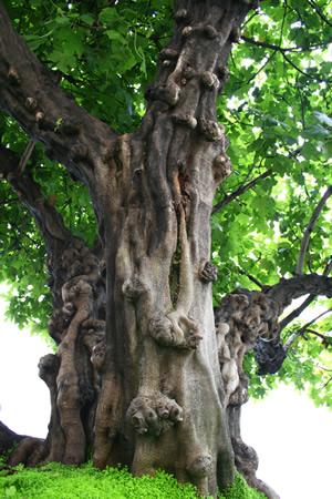 thetree